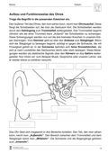 Biologie, Informationsverarbeitung in Lebewesen, Bau und Funktion von Biosystemen, Humanbiologie, Sinnesorgane, Organ, Ohr, Trommelfell, mensch