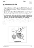 Biologie, Bau und Funktion von Biosystemen, Humanbiologie, Organ, humanbiologie