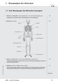 Biologie, Bau und Funktion von Biosystemen, Skelett, Humanbiologie, Körperbau, Gelenke, Muskulatur