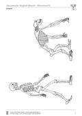 Biologie, Entstehung und Entwicklung von Lebewesen, Bau und Funktion von Biosystemen, Evolution, Tier, Humanbiologie, Menschenaffe, Körperbau, Knochen, mensch