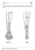 Biologie, Ordnungsprinzipien für Lebewesen, Bau und Funktion von Biosystemen, Homologe Organe, Humanbiologie, Tier, Körperbau, Knochen, mensch, Europa