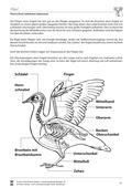 Biologie, Bau und Funktion von Biosystemen, Ordnungsprinzipien für Lebewesen, Tier, Zoologie, Humanbiologie, Vögel, Wirbeltiere, Organ