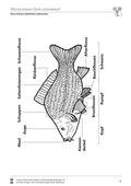 Biologie, Ordnungsprinzipien für Lebewesen, Bau und Funktion von Biosystemen, Zoologie, Tier, Humanbiologie, Wirbeltiere, Fische, Organ