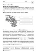 Biologie, Interaktion von Organismus und Umwelt, Kreislauf, Gesundheit, humanbiologie