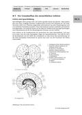 Biologie, Informationsverarbeitung in Lebewesen, Entstehung und Entwicklung von Lebewesen, Humanbiologie, Evolution, Gehirn, Sprachevolution