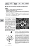 Biologie, Interaktion von Organismus und Umwelt, Entstehung und Entwicklung von Lebewesen, Gefährdung, Erkrankung, Schutzmaßnahmen, schmetterlinge, schwalbenschwanz