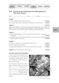 Biologie, Bau und Funktion von Biosystemen, Botanik, Blütenpflanzen, test2