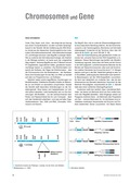 Biologie, Entstehung und Entwicklung von Lebewesen, Genetik, Chromosom, DNA, rna