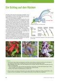 Biologie, Entstehung und Entwicklung von Lebewesen, Bestäubung, pflanzen, pollen