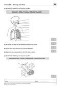 Biologie, Bau und Funktion von Biosystemen, Humanbiologie, Atmung, Organ, Herz, menschlicher körper