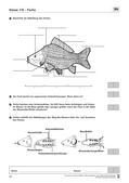 Biologie, Bau und Funktion von Biosystemen, Tier, Fische
