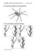 Kunst, Verfahren und Techniken, Zeichnen, strukturieren, Insekten