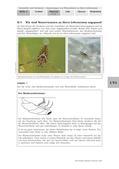 Biologie_neu, Sekundarstufe I, Tiere, Wirbellose Tiere, Lebensraum und Angepasstheit, Rückenschwimmer, Wasserläufer, Wanzen, Insekten, Wasseroberfläche