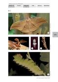 Biologie_neu, Sekundarstufe I, Tiere, Wirbellose Tiere, Beispiele bestimmter Insekten und anderer wirbelloser Tiere, Raupe, Seide, Entwicklungsstadium, Schmetterling