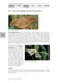 Biologie_neu, Sekundarstufe I, Tiere, Wirbellose Tiere, Beispiele bestimmter Insekten und anderer wirbelloser Tiere, Unterschied, Seide, Industrie, Wandel, Merkmale, Metamorphose, Schmetterling