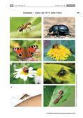 Biologie_neu, Sekundarstufe I, Tiere, Wirbellose Tiere, Beispiele bestimmter Insekten und anderer wirbelloser Tiere, Gliederfüßer, Unterteilung der Ordnungen