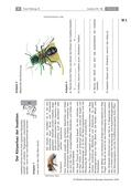 Biologie_neu, Sekundarstufe I, Tiere, Wirbellose Tiere, Anatomie und Lebensweise, Beispiele bestimmter Insekten und anderer wirbelloser Tiere, Merkmale und Verhaltensweisen, Zeichnung Insektenkörper, Aufbau Flügel, Funktion Mundwerkzeuge, Erläuterungen Lehrer