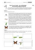 Biologie_neu, Sekundarstufe I, Tiere, Wirbellose Tiere, Anatomie und Lebensweise, Fortpflanzung, vom Ei zum Insekt, Metamorphose im Wasser
