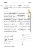 Biologie_neu, Sekundarstufe I, Pflanzen, Samenpflanzen, Bedeutung der Samenpflanzen für den Menschen und die Natur, Süßgräser, Stabilität des Getreidehalms