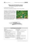Biologie_neu, Sekundarstufe I, Pflanzen, Samenpflanzen, Wachstum Feuerbohne, Wachstum Erbesnpflanze, Wurzelkletterer, Rankenkletterer
