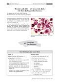Biologie_neu, Sekundarstufe I, Zellbiologie, Der Mensch, Aufbau und Funktionen der Zellbestandteile, Anatomie, Zellorganellen, Organe, Merkmale, Unterscheidungen und Funktionen der Organe