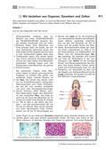 Biologie_neu, Sekundarstufe I, Zellbiologie, Der Mensch, Aufbau und Funktionen der Zellbestandteile, Anatomie, Zellorganellen, Organe, Merkmale, Unterscheidungen und Funktionen der Organe, Chloroplasten, Pflanzenzellen, tierische Zellen, Nervenzellen, Knorpelzellen, Blutzellen