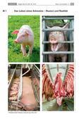 Religion-Ethik_neu, Sekundarstufe I, Wir in der Welt, Natur und Umwelt, Menschen, Tiere und Pflanzen, Tiere und Tierschutz, Vegetarismus, Umgang mit Tieren, Verantwortungsbewusstsein, Empathie, Tierschutz, Schwein, Umwelt, Ernährung, Ernährungsweisen, Veganismus