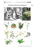 Biologie_neu, Sekundarstufe I, Pflanzen, Samenpflanzen, Bedeutung der Samenpflanzen für den Menschen und die Natur, Nutzen von Heilkräutern, Spitzwegerich, Vorkommen von Heilkräutern, Eukalyptus, Glossar