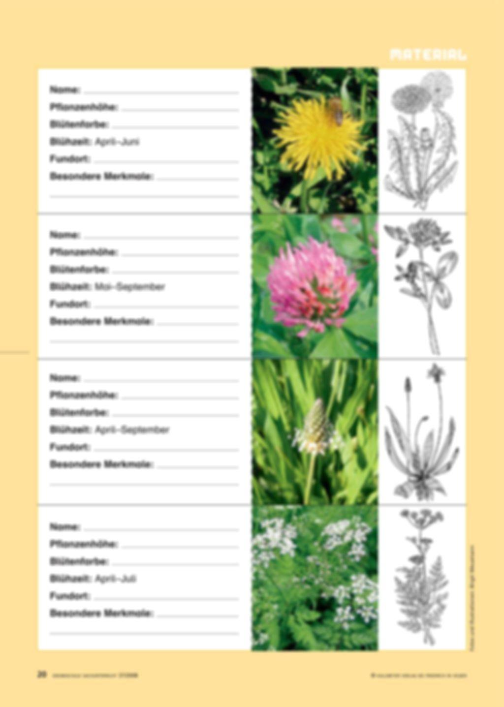 Sag mir, welche Blumen blühen Preview 5