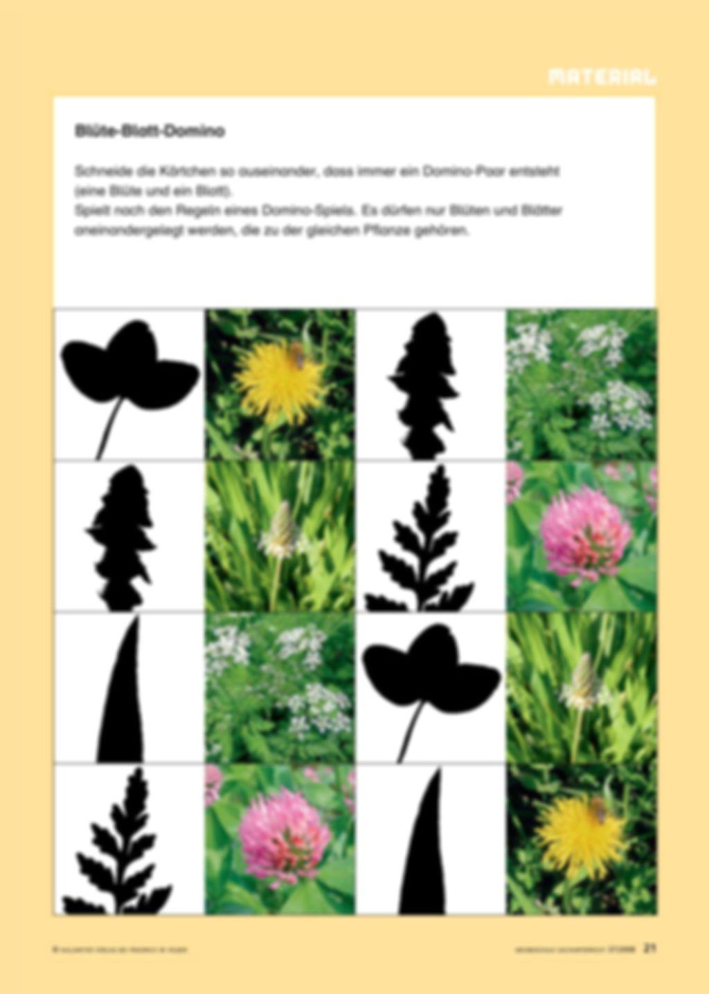 Sag mir, welche Blumen blühen Preview 6