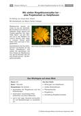 Biologie_neu, Sekundarstufe I, Pflanzen, Samenpflanzen, Bedeutung der Samenpflanzen für den Menschen und die Natur, Organe und Funktionen, Wirkungen Heilpflanzen, Blütenpflanzen, Pflanzenfamilien, Ringelblume, Heilwirkungen von Pflanzen