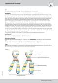 Biologie_neu, Sekundarstufe I, Genetik, Zellbiologie, Chromosomen und DNA, Erbkrankheiten, Zellteilung, Bau der Chromosomen, Arten von Mutationen, Mitose und Meiose, Mitose, Meiose, Chromosomenmutationen, Chromosomen, Genetik, Chromosomen vorstellen, Bau von Chromosomen, Bedeutung von Chromosomen, Chromatid, Centromer, Chromosomen basteln, homologe Chromosomen, Chromatinfaden, Chromosomen-Modell, Stop Motion Video, Mitose, Zellteilung, Erhalt des Erbguts, Erbgut, Prophase, Phasen der Mitose, Metaphase, Anaphase, Telophase, Chromosomen im Wandel, Zellzyklus, Interphase, Meiose, Vererbung, Keimzelle