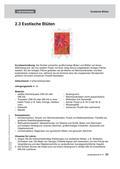 Kunst_neu, Sekundarstufe I, Flächiges Gestalten, Zeichnen, Grafische Elemente, Kontrast, Farbe, Papier, Fläche, Motiv, Kreide, Blüte, Skizze