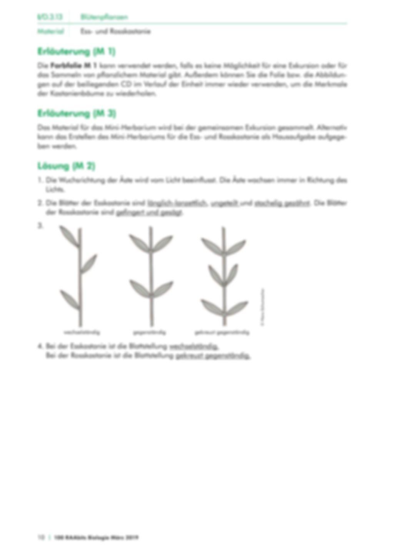 Die Merkmale von Kastanienbäumen Preview 4