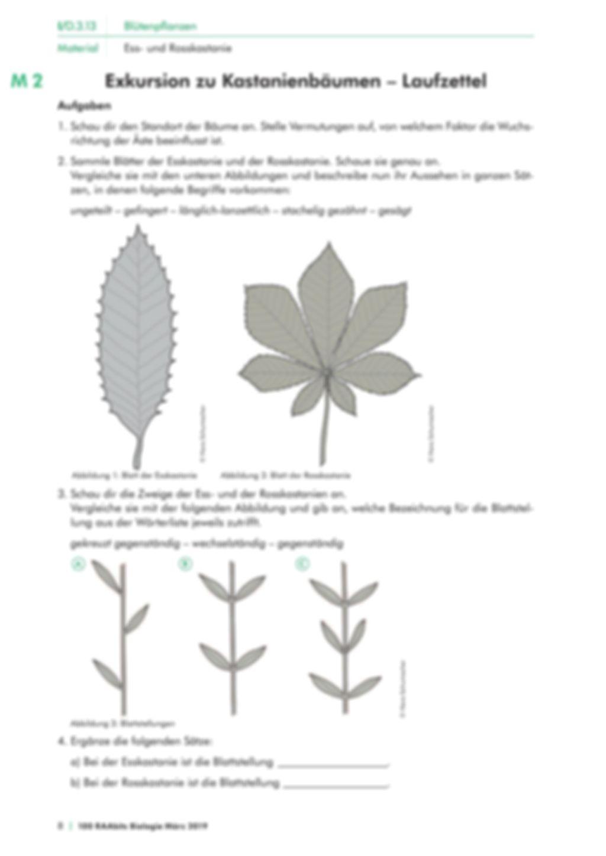 Die Merkmale von Kastanienbäumen Preview 2