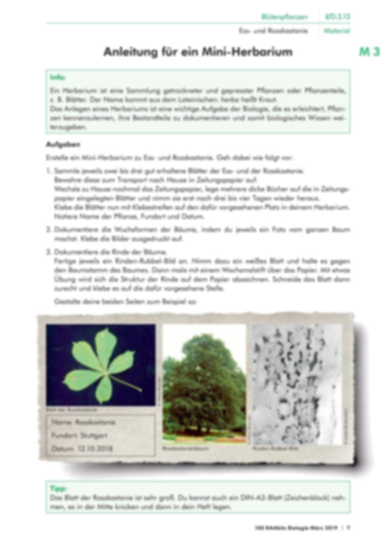 Die Merkmale von Kastanienbäumen Preview 3